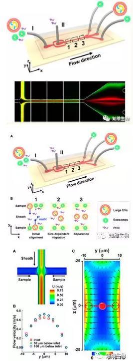 无磁场条件下,通过微流控从细胞外膜泡中分离外泌体