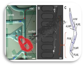 个体水平药物筛选微流控生物芯片