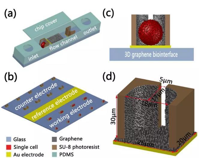 图2三维石墨烯仿生界面细胞电阻抗传感器基于的微流控芯片效果图