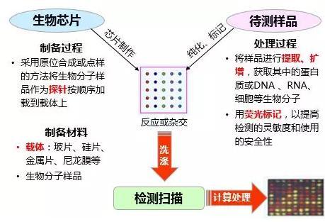 图1.生物芯片工作原理示意图