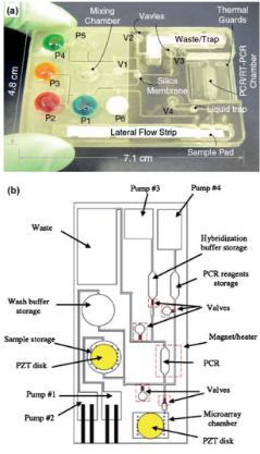 聚碳酸酯微流体盒,其中袋填充染料更好的可视化,他们被设计来存储各种试剂和缓冲区