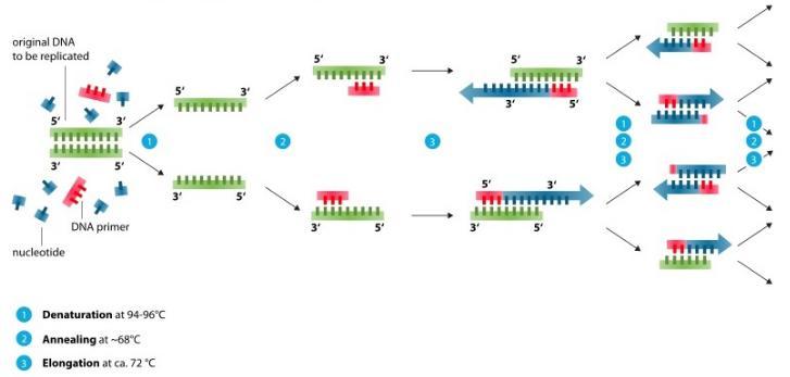 PCR需要几种常见混合物的试剂