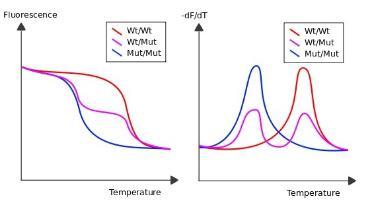 嵌入剂qPCR的解析曲线分析