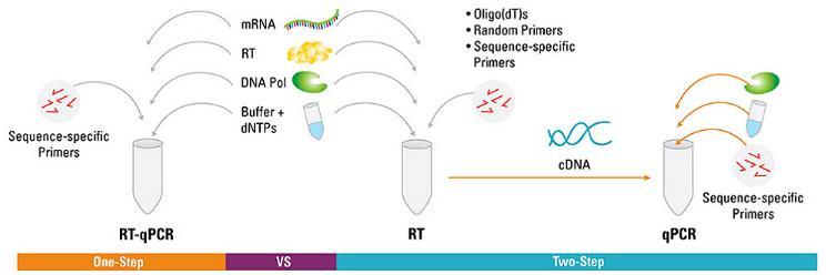 RT-PCR:一步和两步法