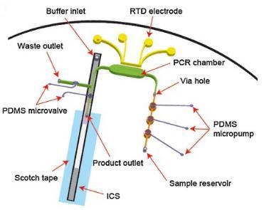 与免疫色谱(或侧向流动)检测相关的微流控RT-PCR测定