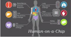 多器官芯片