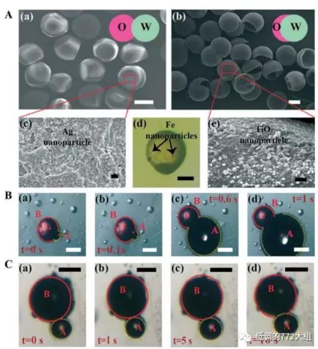 图2. 两种结构的Janus颗粒
