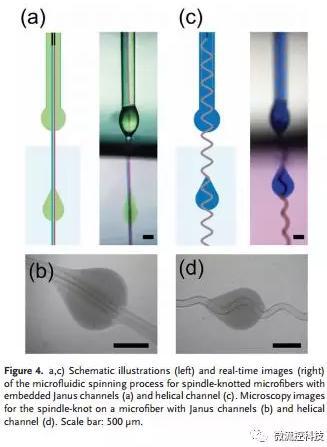 微流控免油纺丝法制备具有不同结点和可灌注通道的仿项链微纤维