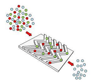 示意图显示了EV-HB-Chip的抗体包被的芯片表面如何从患者血清或血浆中捕获红色和绿色标记的肿瘤特异性细胞外囊泡。
