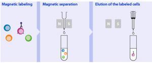 商业磁性颗粒分离
