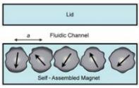 用于微流控颗粒分选的永磁体