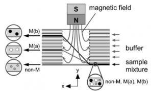 用于连续微流体颗粒分选的大块磁体