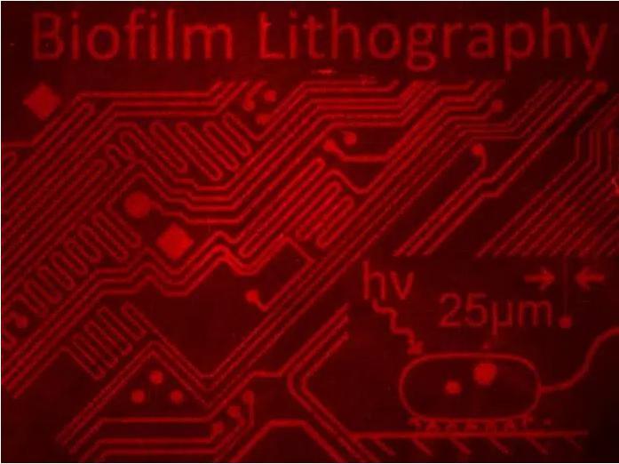 用细菌群落制作复杂的图像