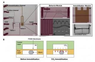 线虫 在微流控芯片上的二氧化碳固定化
