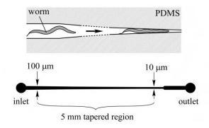 用于 线虫 诱捕的微流控阵列夹具