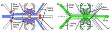 线虫 固定在芯片-凝胶杂化微流体装置
