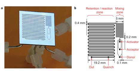 """图16:用于反应优化的微流控反应器,其中改变反应温度,试剂浓度和停留时间以确定糖基化反应的最佳反应条件。降低了由硅和派热克斯制成的整个芯片。b显示芯片的设计,采用三个供体,受体和活化剂入口,随后将其混合并使其反应,在反应结束时加入淬火剂。Ratner等人的图片""""有机化学中基于微反应器的反应优化 - 糖基化作为挑战""""。"""