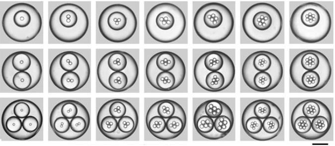 """一系列高度单分散三重乳液的光学显微照片图像,其具有受控数量的内部和中部液滴,由扩展的毛细管微流体装置产生。用200μm的比例尺显示。Chu等人的图像。""""可控的单分散多重乳液"""""""
