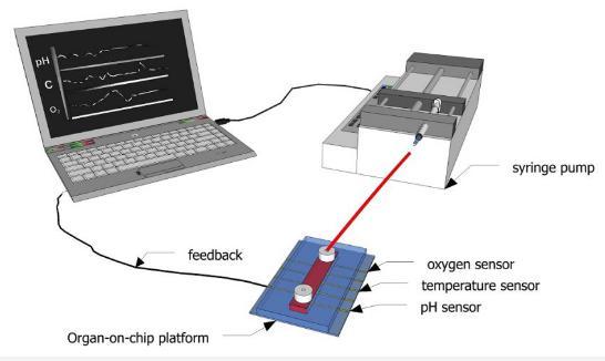 图1:示意图显示了如何使用传感器连续监测微流体通道内的生化参数。