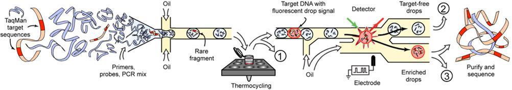 用于目标基因富集的基于液滴的微流体系统