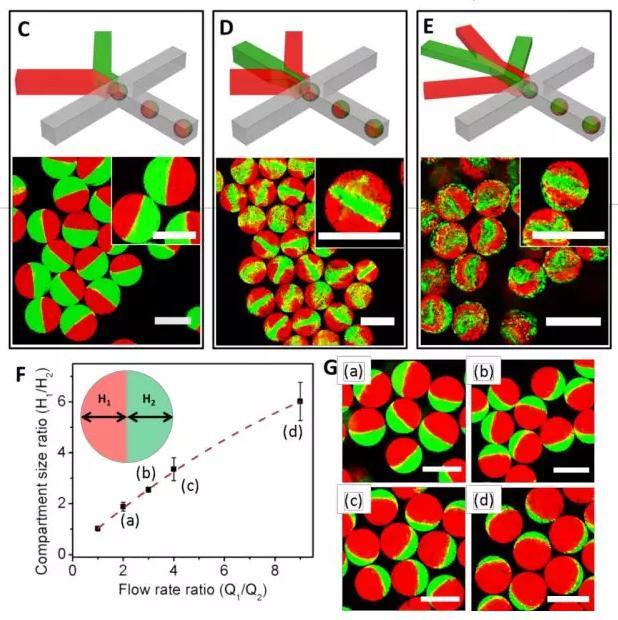 图1 微流控液滴技术制备可控微观结构的多瓣微凝胶。
