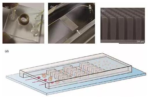 基于微流控芯片的生物组织解离方法