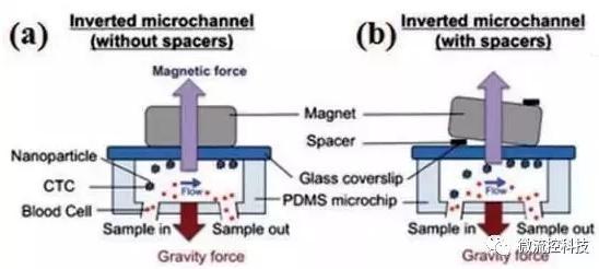图3:基于免疫磁珠分离CTCs的微流控系统