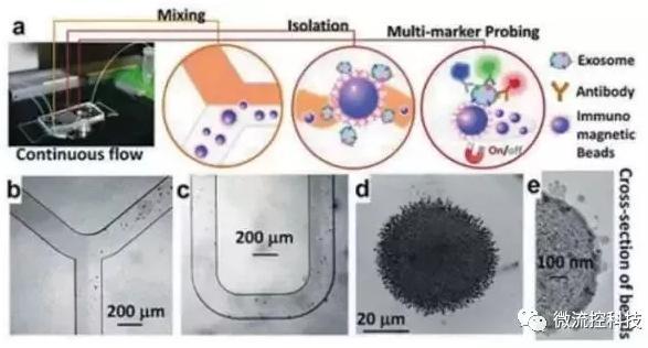 图4:基于免疫亲和原理分析外泌体的微流控系统