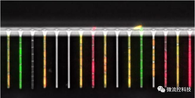 球最小的实验室, 集成微流控动态可控监测单细胞基因调控