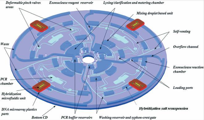 图2:Lab-on-Disc设备的显示,显示了四个平行测试以及各个组件,指示裂解,PCR扩增,外切核酸酶反应,微阵列杂交等功能。
