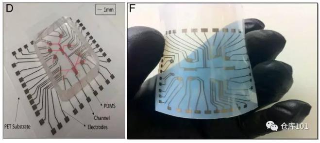 图2. D)检测平台实物图 F) PET柔性电路板实物图