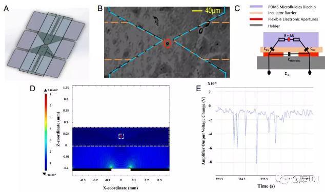 图6. 实时单细胞计数 A)微流控芯片示意图;B)单个细胞通过电极显微照相图;C)等效电路图;D)单个细胞通过的电势计算图;E)6个PMS微球通过的实验测量电势图