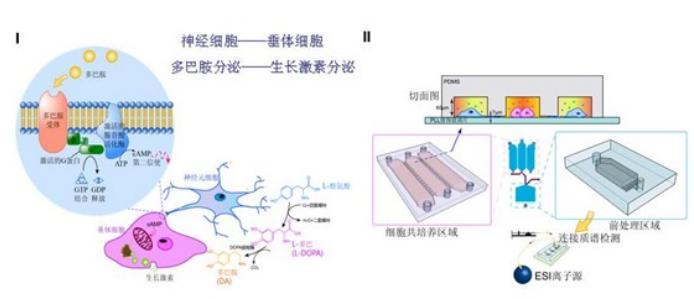 微流控细胞培养芯片