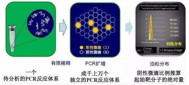 dPCR基本原理(微滴式)