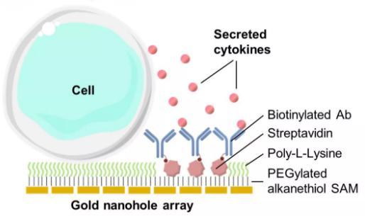 单个细胞也为开发癌症以及自身免疫性疾病的新疗法铺平了道路