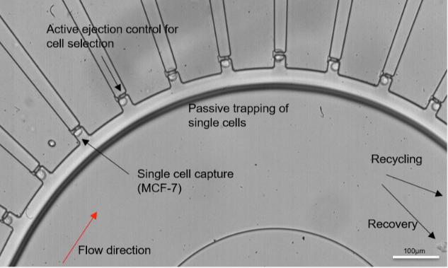 微流控单细胞分离装置