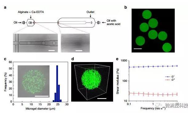 微流控技术开发微型弹性球,可用于癌症诊断