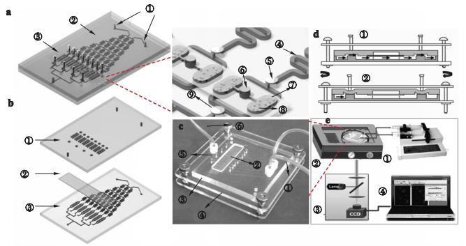 图2海洋微藻培养及毒性筛选微流控芯片示意图及实物图