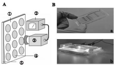 图3微藻叶绿素荧光检测芯片