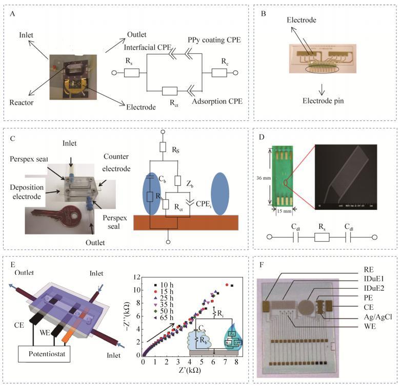 图3微流控芯片电化学阻抗检测生物被膜实例