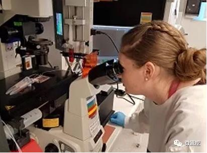 微流控技术在孕妇血样检测领域取得突破