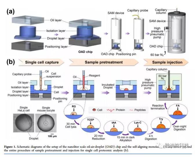 单细胞蛋白质