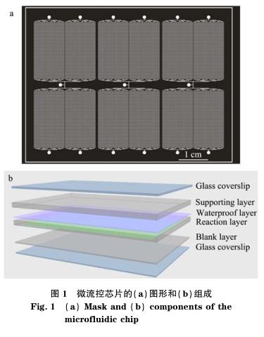 微流控芯片a和b的组合