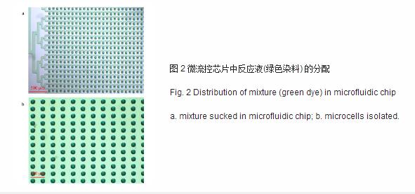 微流控芯片中反应液绿色染料的分配