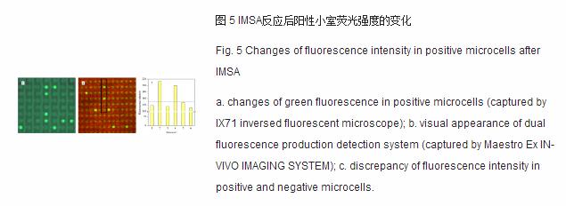 imsa反应后阳性下室荧光强度的变化