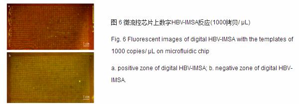 微流控芯片上数字HBV-IMSA反应