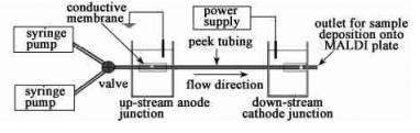 电场固定化酶反应微流控芯片