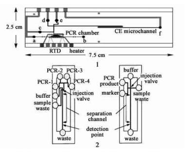 PCR 产物检测电泳芯片
