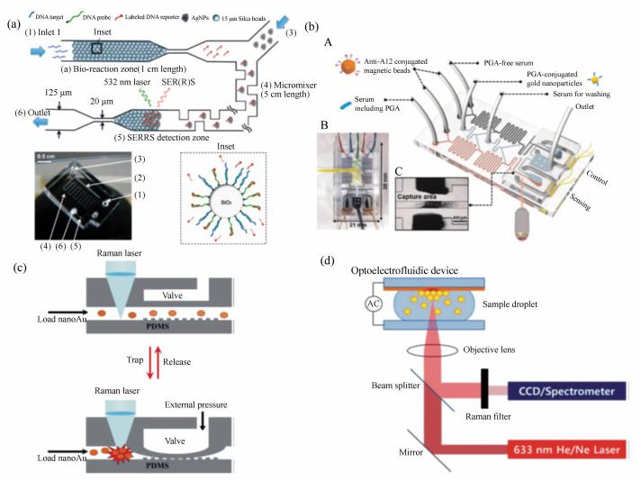 集成DNA竞争取代序列检测的SERRS微流微系统