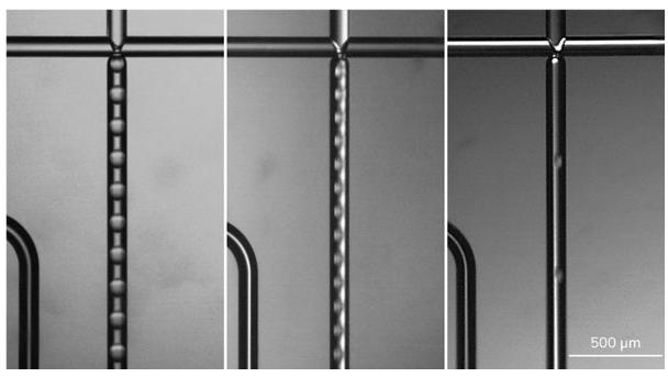 Aqua-Phase中不同大小的PLGA / DCM液滴的图像